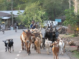 Amhara Region standard road traffic