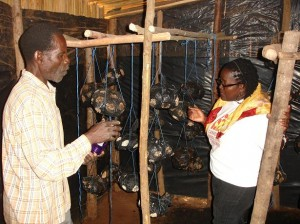 Abubakari, a HUYSLINCI volunteer and parent (left) showing Amboka Wameyo, CFTC's Regional Program Manager - Africa, his indoor hanging mushroom farm.