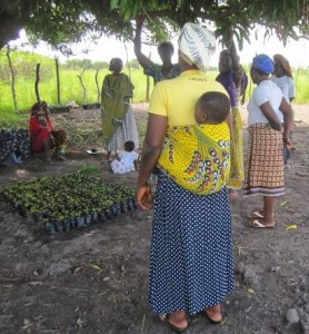 Women beneficiaries at TUDRIDEP (Upper West Region, Ghana) tree nursery alternative income generation program, part of the CHANGE project.