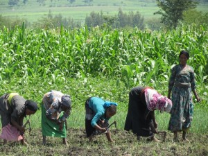 Ethiopian women farming at irrigation site