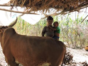 Truth about goats: a young mother stands next to a cow, purchased through income from goat rearing.