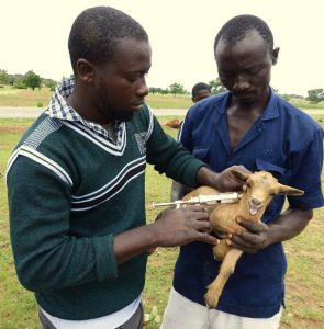 Vaccinating goats: Veterinarian Mustala Sakara with Peter Boare