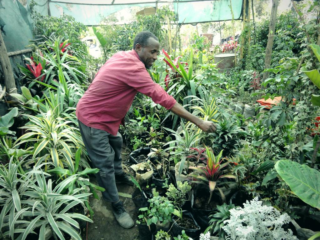 Garden shop: Dino tends to the plants in his garden shop in Ethiopia