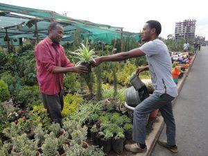 Garden shop: Dino hands a seedling to a customer