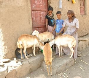 A mothers promise.: Yeshi and her children with their four sheep