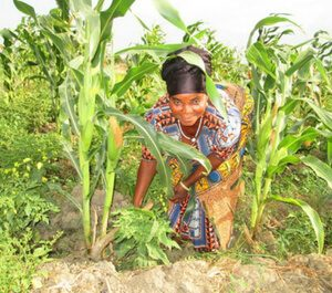 Farmer's collective: Madam Akasele in her garden