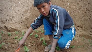 11-year-old Efrain working in the garden