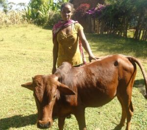 Tsion standing with her farm ox