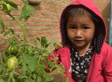 Little girl smiling in her garden next to a tomato plant