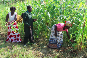 a community agricultural worker works with women farmers to improve crop yields.