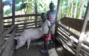 Two boys stand with a pig in a pen, part of a Ugandan pay-it-forward livestock scheme.