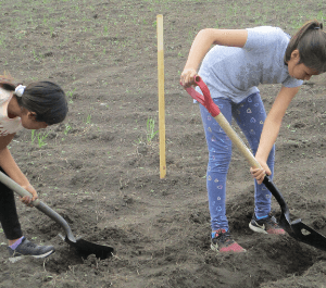 Two girls digging in the community garden