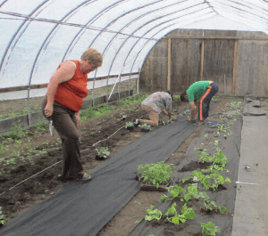 Community members gardening inside a greenhouse