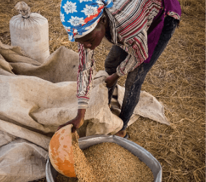 A woman pours seeds into a large bucket