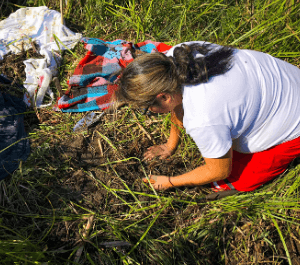 A woman works her in backyard garden planting