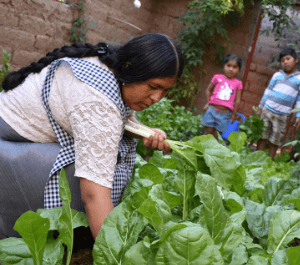 A woman harvests her crops in her garden while her children watch her.