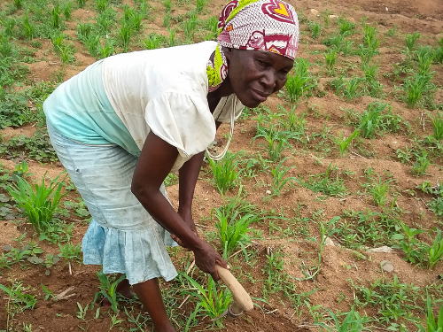 A woman tills her farm land