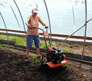 A woman in the garden tunnel uses a rototiller
