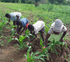 A group of people weeding and tilling soil in their farm