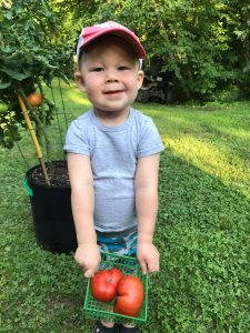 A toddler wearing a gray shirt and baseball cap holds a small basket of tomatoes. Behind him is a tomato plant, and he is in a lush green garden.