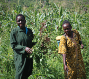 Jane in green at left holds a plant, while another woman in yellow at right does pest control. They are both standing in a field with tall plants.