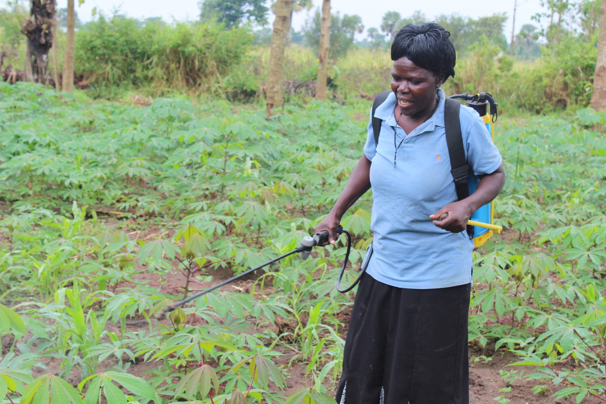 Women spraying her crops
