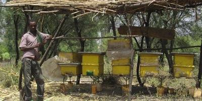 EDA-bee-hives