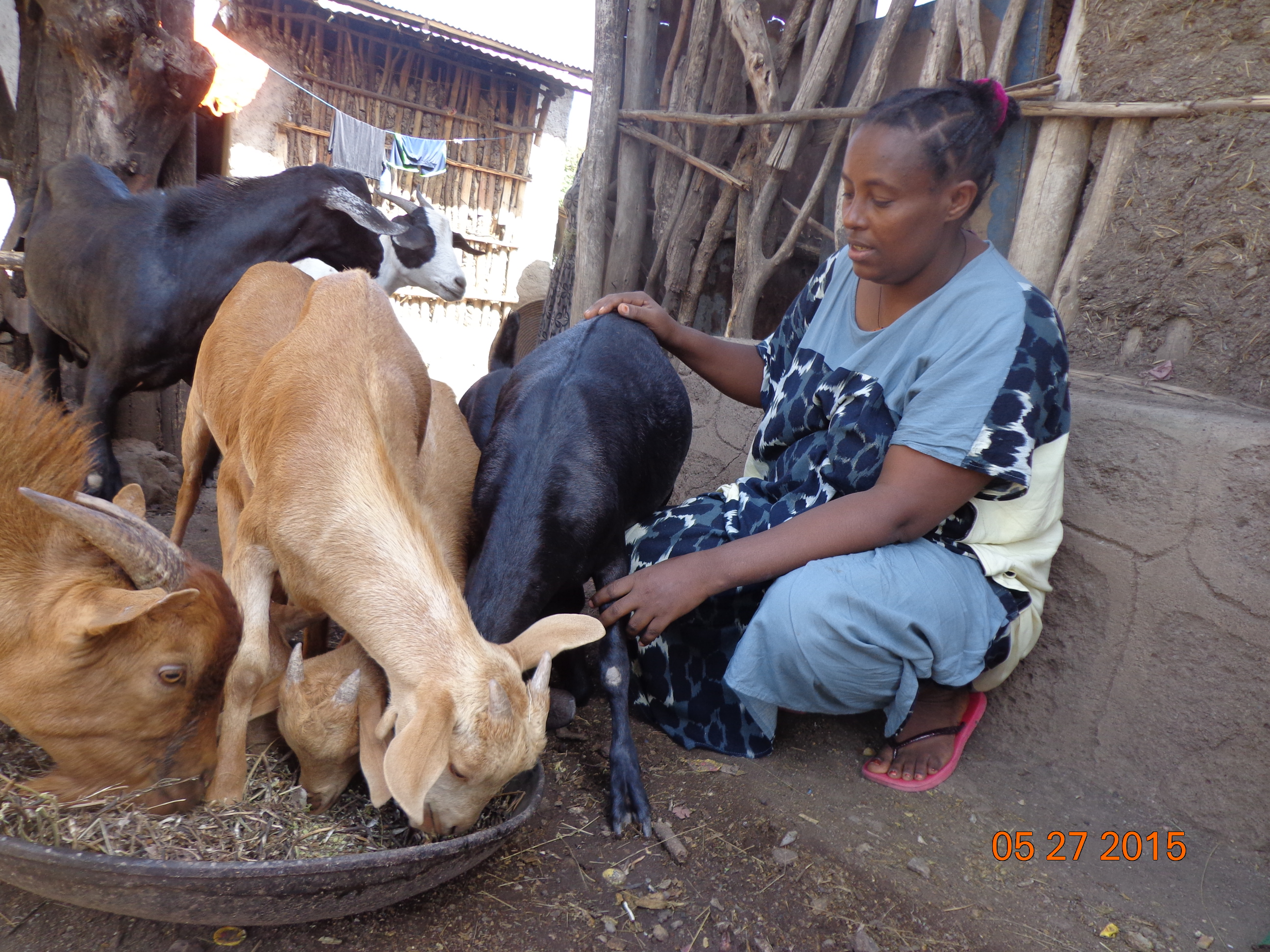 Buy a Goat for a Family in Africa: The Pros & Cons | CFTC